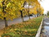 Rivne, UA The fall in my city